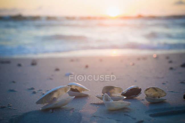Раковины на побережье Балтийского моря на восходе солнца — стоковое фото