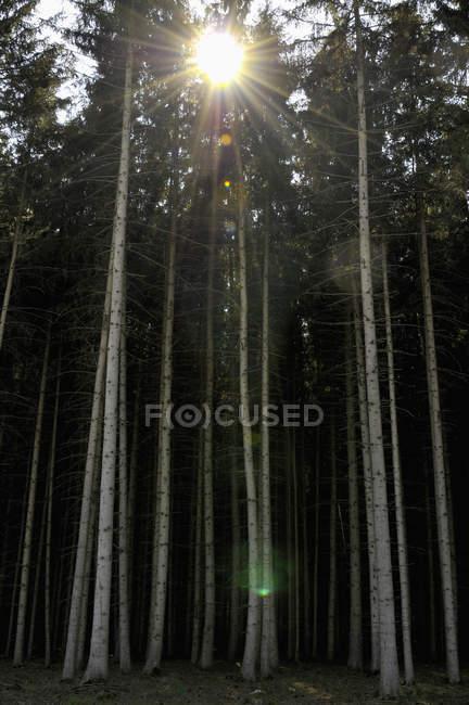 Германия, Бавария, Вид на лес — стоковое фото