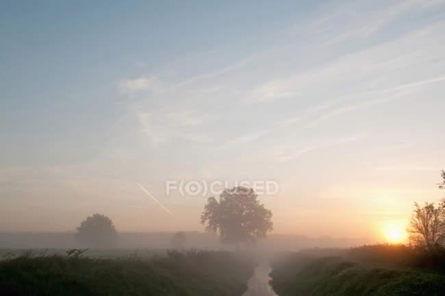Вид на деревья и реку в утреннем тумане в Мбаппе, Германия — стоковое фото