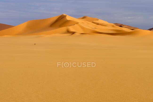 Алжир, Сахара, видом на піщані дюни — стокове фото