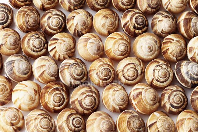 Full frame of spiral snails shells — Stock Photo