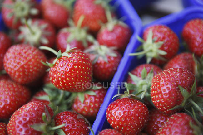 Strawberries in boxes at farmer market — Stock Photo