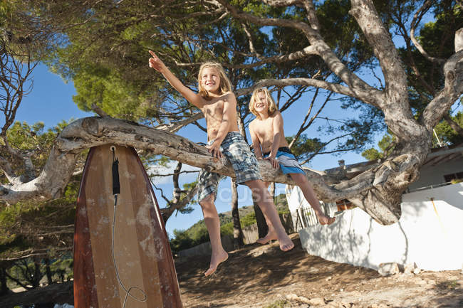 Crianças sentadas em pinheiros com prancha — Fotografia de Stock