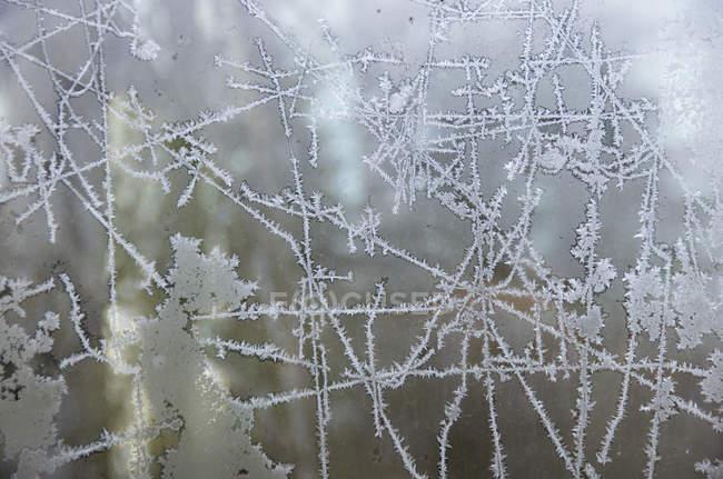 Germania, Francoforte, Vetro per finestre con motivo a gelo — Foto stock