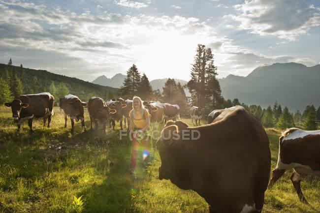 Австрия, Зальцбург Каунти, молодая женщина, ходить в альпийский луг с коровами — стоковое фото