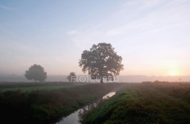 Vue des arbres et de la rivière dans la brume matinale à Brandebourg, Allemagne — Photo de stock