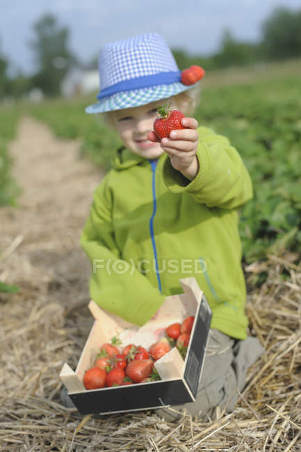 Boy showing strawberry in field, smiling — Stock Photo