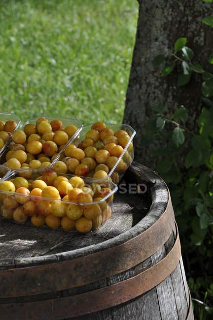 Prugne gialle in scatole di plastica — Foto stock