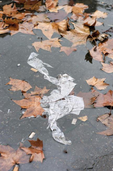 Primo piano di foglie autunnali e carta in pozzanghera — Foto stock