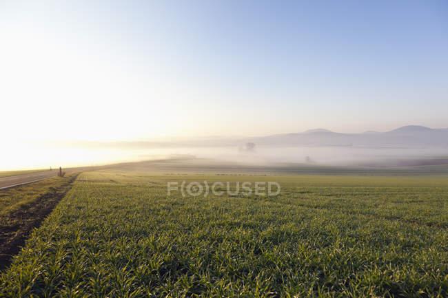 Германия, Рейнланд-Пфальц, Дневной вид на ландшафт — стоковое фото