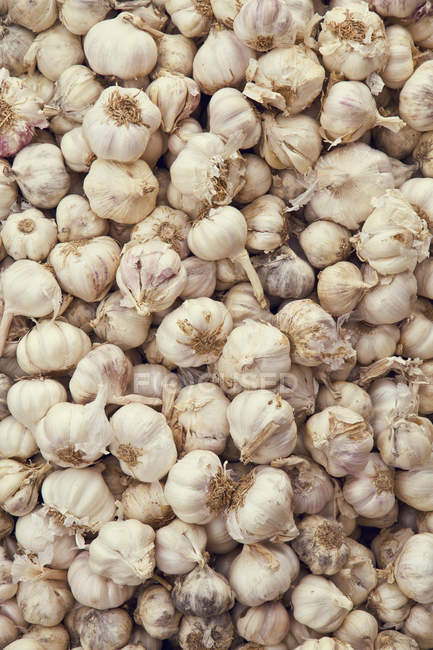 Lampadine di aglio in mucchio — Foto stock