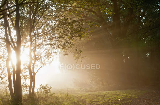 Германия, Бранденбург, Вид на лес с туманом — стоковое фото