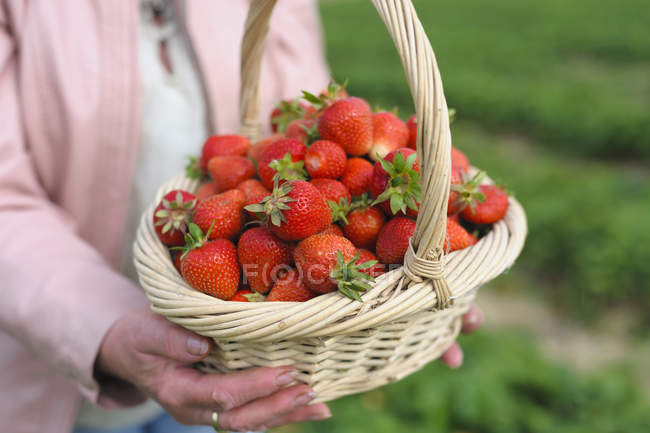 Woman holding straw basket of strawberries — Stock Photo