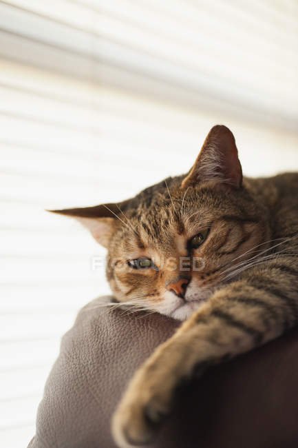 Ginger Cat relaxing on couch — Stock Photo