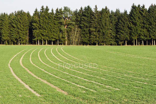 View of field and forest at daytime Bavaria, Germany — Stock Photo
