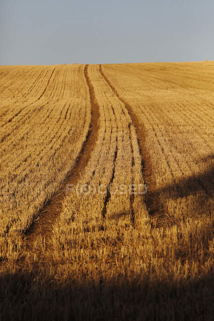 Germany, Saxony, View of agricultural field in autumn during daytime — Stock Photo