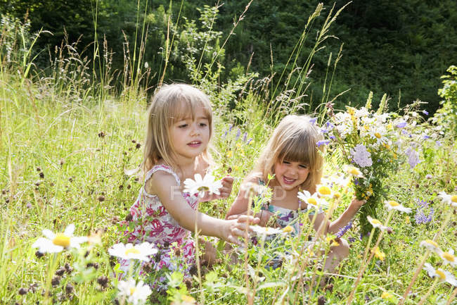 Girls picking flowers in summer meadow in Salzburg, Austria — Stock Photo