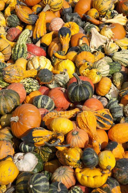 Different pumpkins in heap — Stock Photo