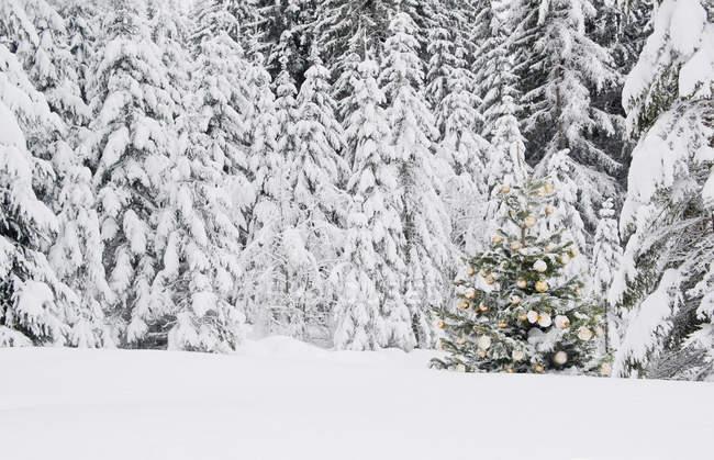 Decoración árbol de Navidad en el bosque nevado de Salzburg, Austria - foto de stock