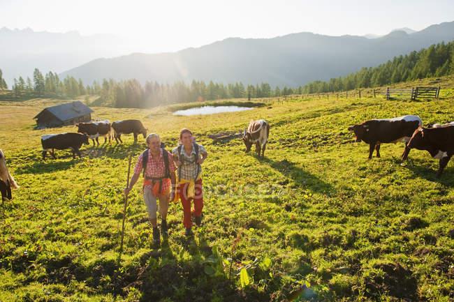 Пара, ходить через луг с коровами — стоковое фото
