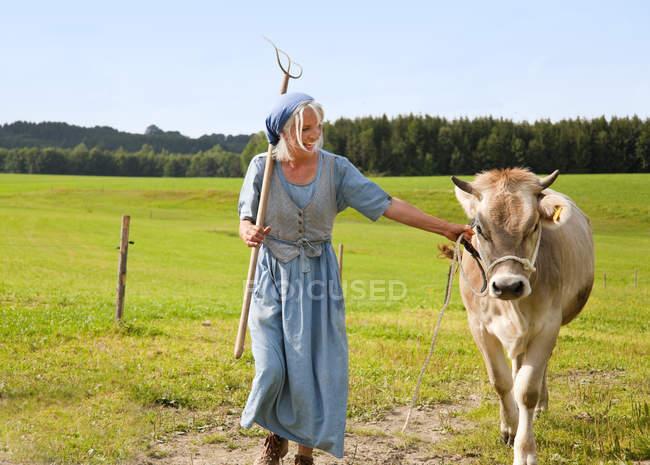 , Літня жінка з корови на фермі — стокове фото