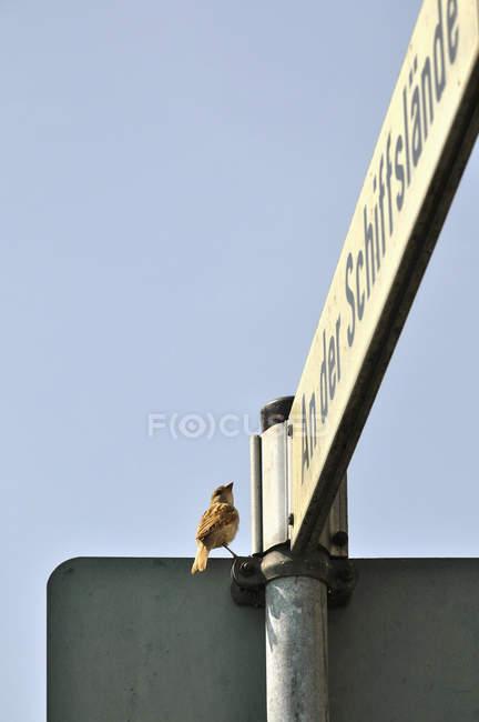 Воробей усаживаться на улице знак против неба. — стоковое фото