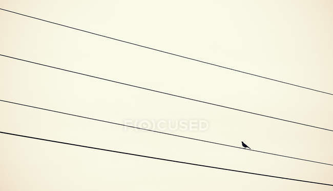 Austria, Bird sitting on power supply line — Stock Photo