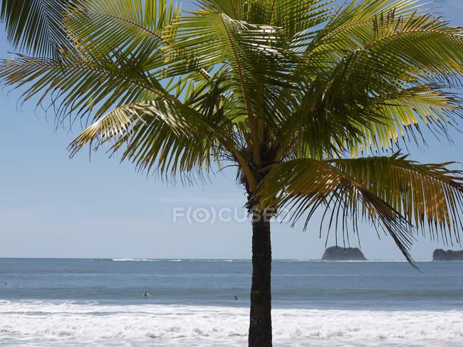 Albero di palme sulla spiaggia — Foto stock