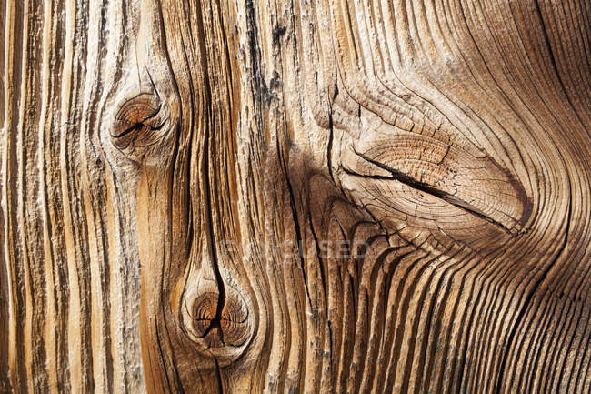 Old spruce wood board, close up — Stock Photo