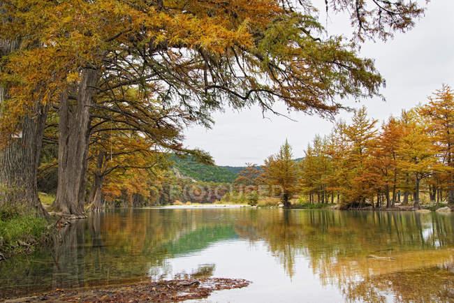 Cipreses con hojas doradas en Frio River Texas, Estados Unidos - foto de stock