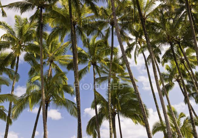 Palmeiras e céu com nuvens — Fotografia de Stock