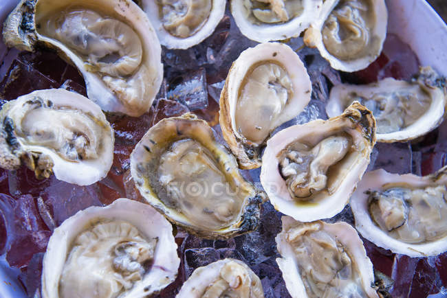 Fresh raw shell oysters served on ice — Stock Photo