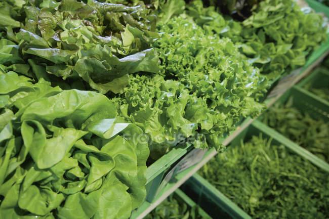 Variété de légumes-feuilles — Photo de stock