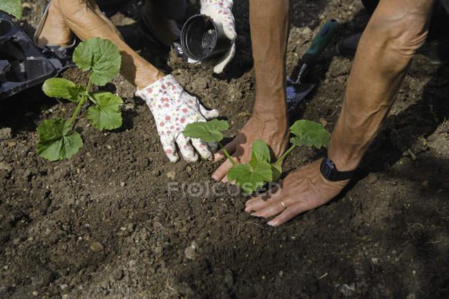Senior couple gardening plants — Stock Photo
