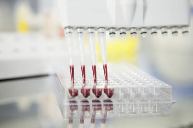 Blood analysis in multichannel pipettes — Stock Photo