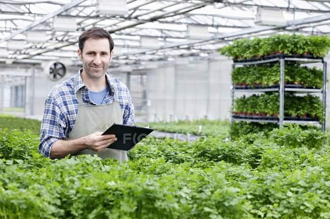 Man in greenhouse between parsley plants — Stock Photo