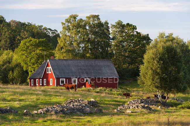 Suède, Hoor. Rural à la ferme avec du bétail — Photo de stock
