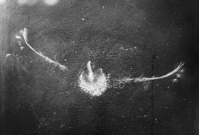 Forme de l'oiseau sur verre de fenêtre en Bavière, Allemagne — Photo de stock