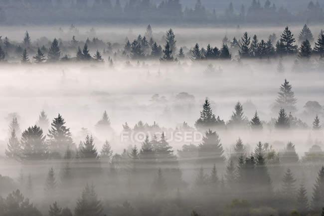 Niebla de la mañana en el bosque - foto de stock