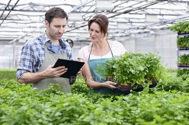Man and woman with clip board in greenhouse — Stock Photo