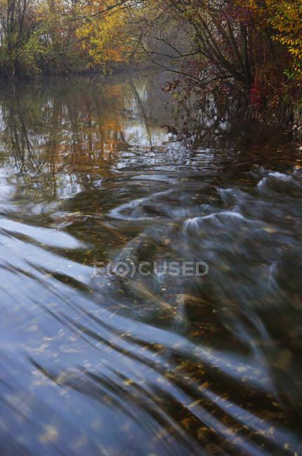 Austria, Zellerache River with trees during autumn — Stock Photo