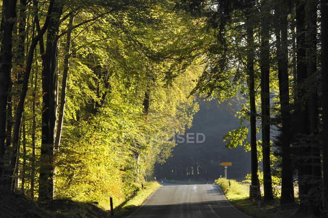Вид на проселочную дорогу с деревьями в Германии, Бавария, Франкония, Уппер Франкония, Франконская Швейцария, Бурггайлент , — стоковое фото