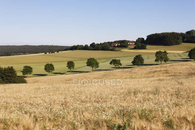 Германия, Бавария, Вид на зерновое поле под Берацхаузеном — стоковое фото