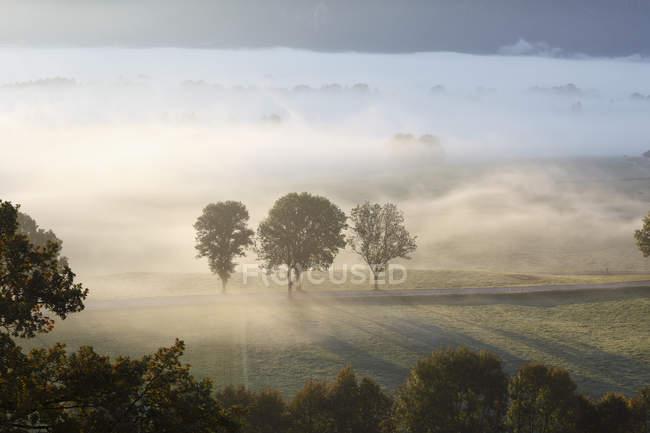Árvores em campo nebuloso — Fotografia de Stock