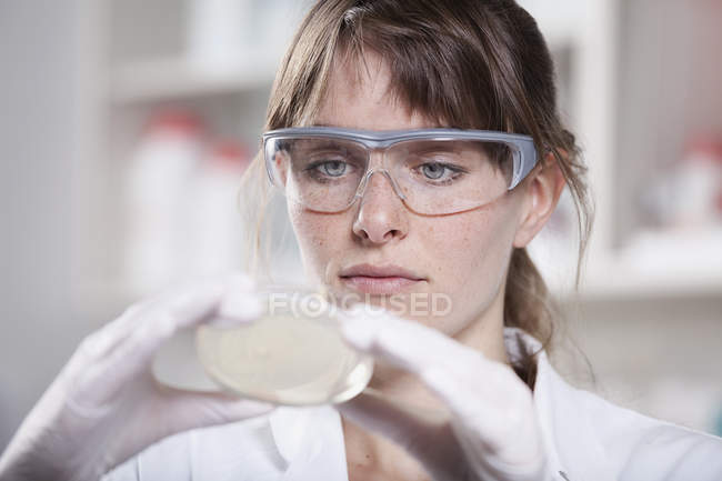 Scientist woking with petri dish — Stock Photo