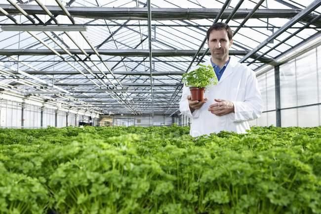 Scientist standing between parsley plants — Stock Photo