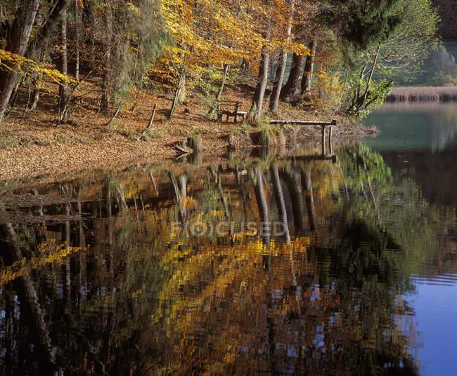 Germany, Bavaria, Upper Bavaria, autumn forest with pond — Stock Photo