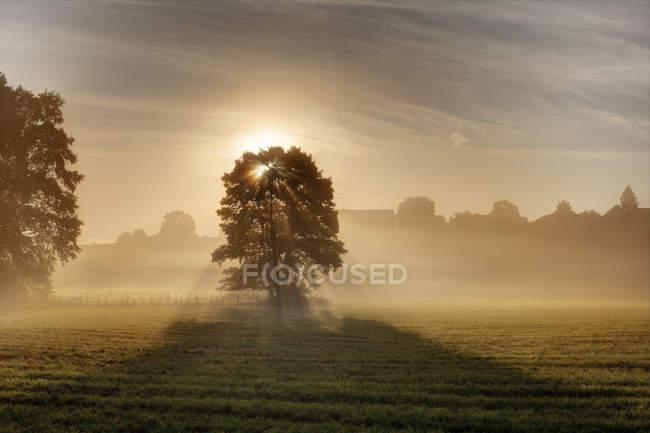 Германия, Бавария, Верхняя Бавария, Рупертивинкель, Абтсдорф, дерево утром с солнечным светом — стоковое фото