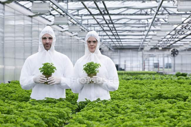 Scientists in greenhouse with parsley plants — Stock Photo