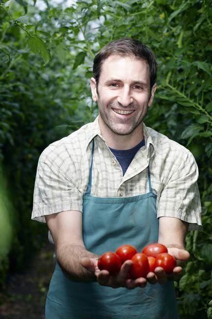 Uomo che tiene pomodori in serra — Foto stock